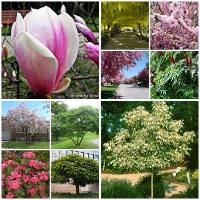 10 Najładniejszych Drzew Liściastych Ogrodnik Tomek
