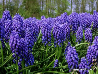 Kwiaty Wiosenne Nazwy