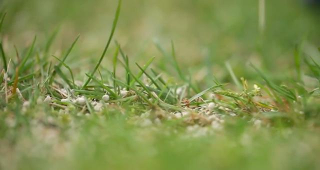 Trawnik świeżo nawiezony