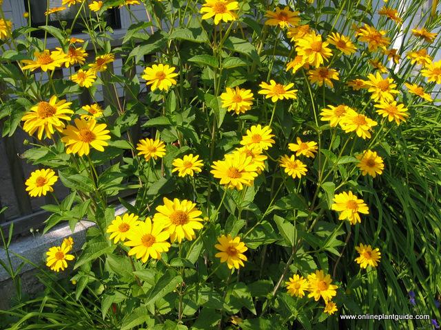 Rosliny Kwitnace Przez Cale Lato Ogrodnik Tomek
