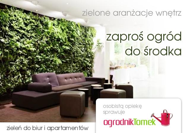 Rośliny do biur - Warszawa