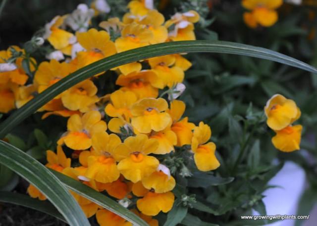 Kwiaty Balkonowe Najladniejsze Rosliny Ogrodnik Tomek