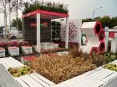 Ogród pokazowy Ogrodnika Tomka i Invest in Green