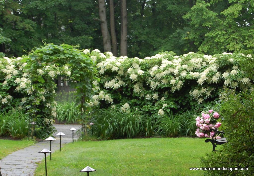10 Najładniejszych Pnączy Ogrodnik Tomek