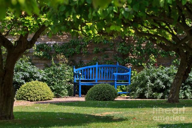 Niebieski Ogr 243 D Inspiracje Zdjęcia Niebieskie Rośliny