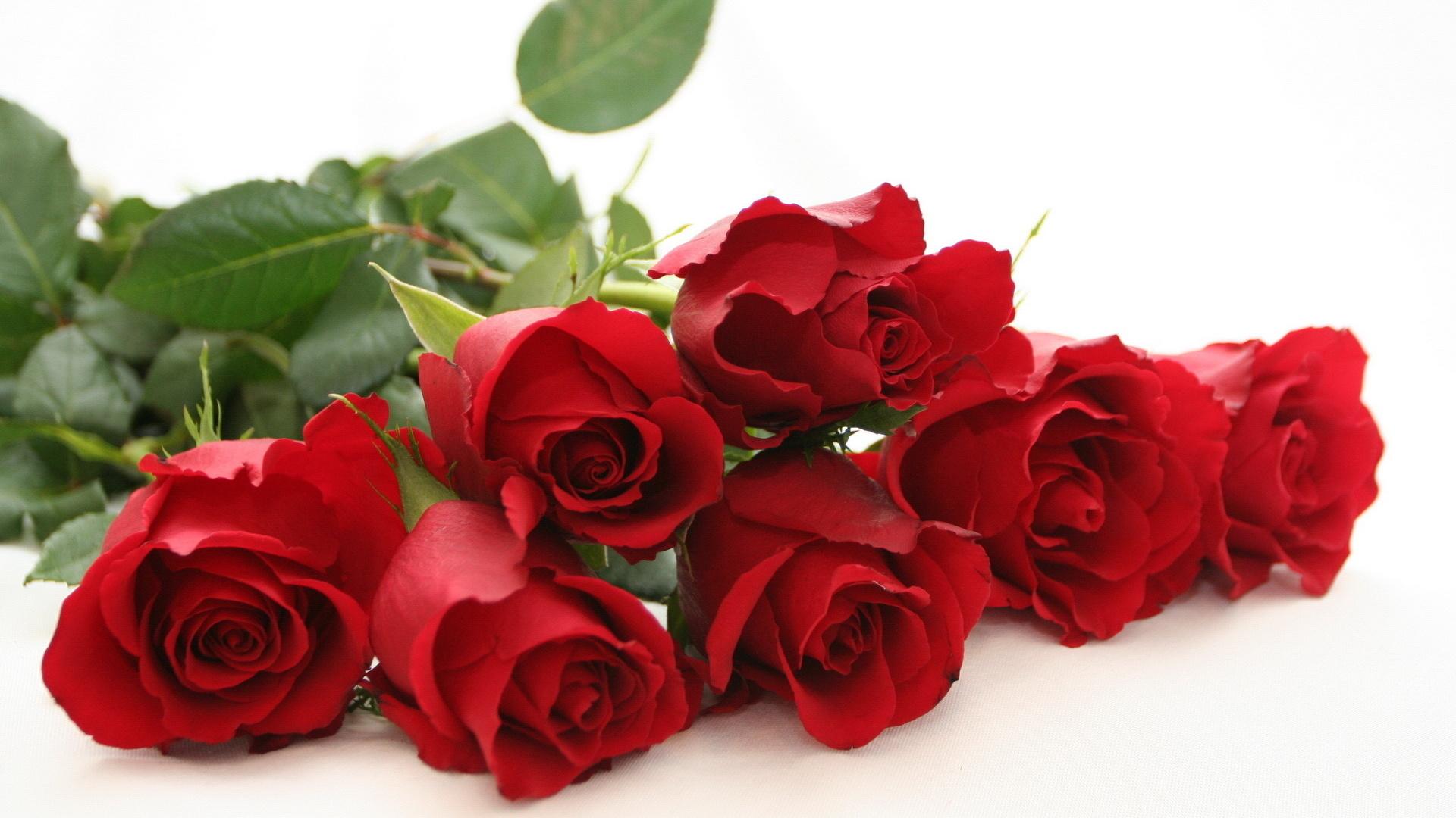 Jakie Kwiaty Na Walentynki Gdzie Kupic Za Ile Jaki Kolor Wybrac Ogrodnik Tomek