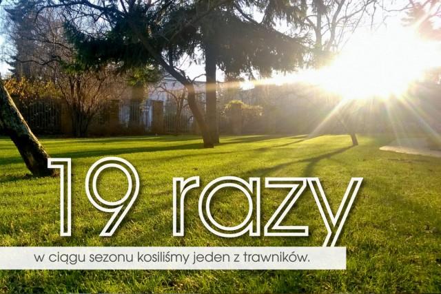 trawnik-01