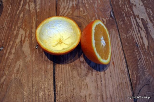 Karmnik z pomarańczy