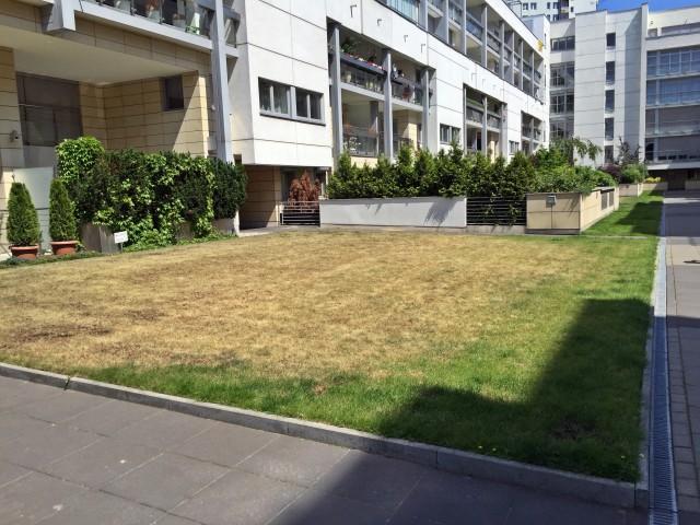 Wyschnięty trawnik na zielonym dachu, na którym zastosowano warstwę substratu od 5 do 10 cm.