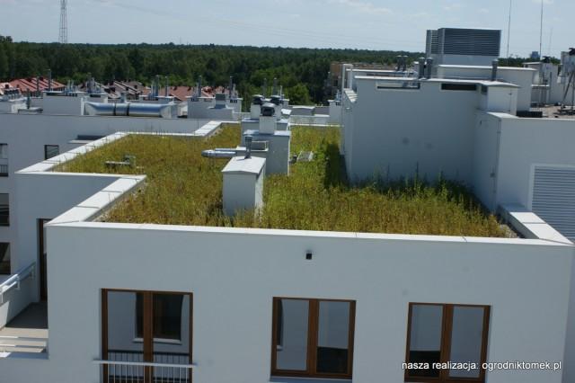 Zielony dach - Ząbki
