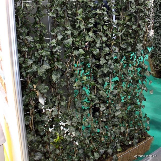 Gotowe ściany z bluszczu - Zielone Ekrany