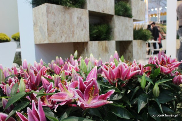 Gardenia 2016 70