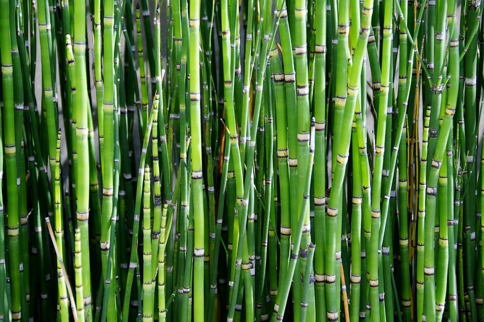 Bambusy mrozoodporne w ogrodzie uprawa i piel gnacja for Bambus dekoration