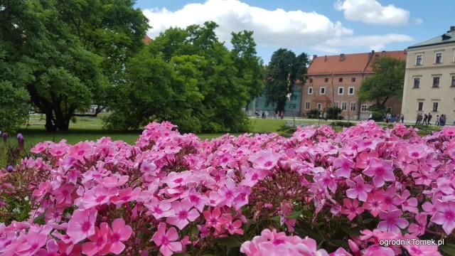 Rośliny na Wawelu