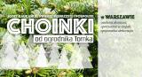 choinki-2016-dostawa-warszawa