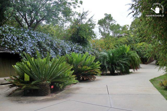 Barcelona Botanic Garden 10