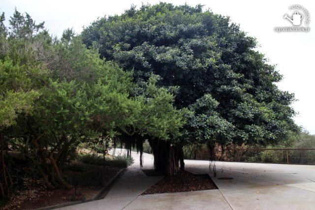 Barcelona Botanic Garden 17