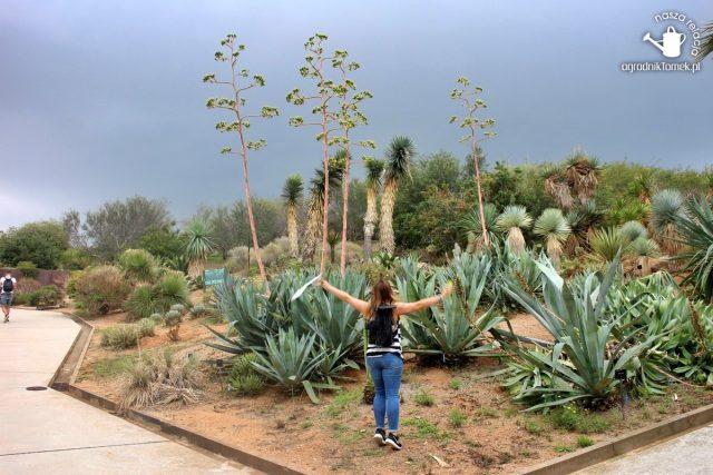 Barcelona Botanic Garden 20
