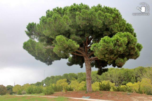 Barcelona Botanic Garden 23