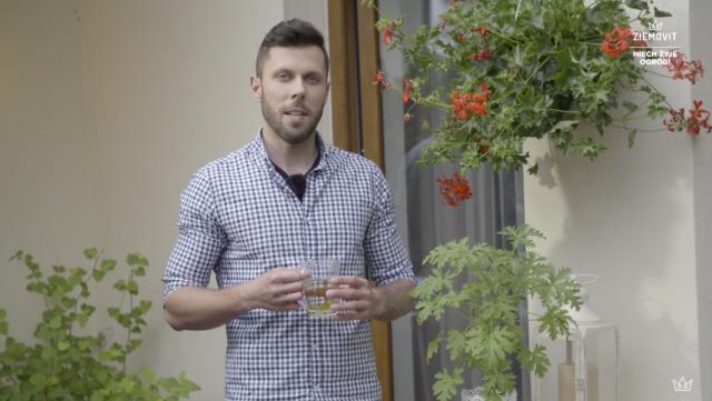 Jak pielęgnować i sadzić pelargonie?