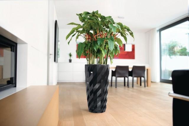 Zaktualizowano Najlepsze rośliny do biura, które oczyszczają powietrze | Ogrodnik NL58