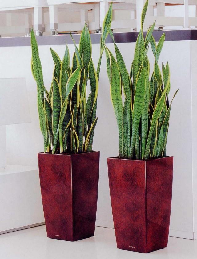 Cudowna Najlepsze rośliny do biura, które oczyszczają powietrze | Ogrodnik XA62