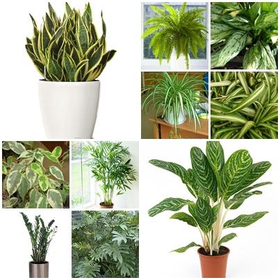 Wspaniały rośliny biurowe | Ogrodnik Tomek IH56