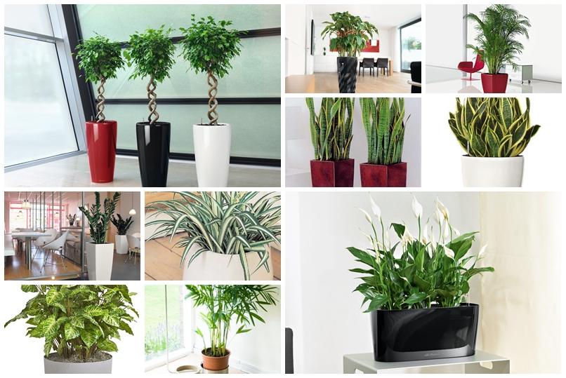 Najnowsze Najlepsze rośliny do biura, które oczyszczają powietrze | Ogrodnik MI52