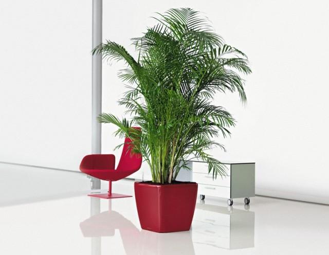 Oryginał Najlepsze rośliny do biura, które oczyszczają powietrze | Ogrodnik OB03