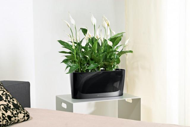 Fantastyczny Najlepsze rośliny do biura, które oczyszczają powietrze | Ogrodnik GL78