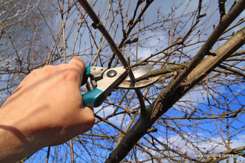Wiosenne przycinanie drzew i krzewów | Ogrodnik Tomek
