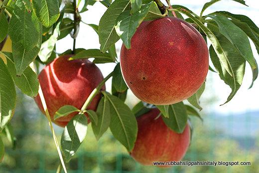 Wiosenne opryski drzew owocowych – nie spóźnijmy się