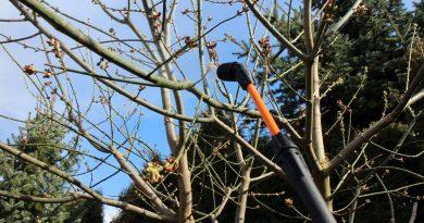 Opryski drzew owocowych w marcu