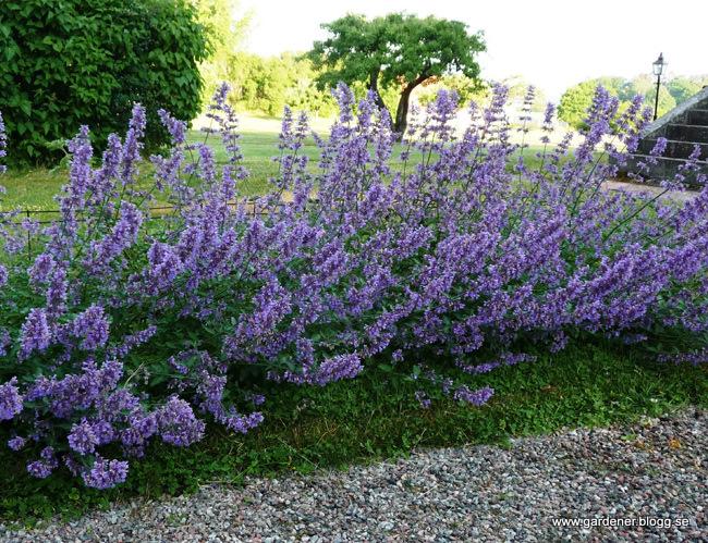 Rośliny Odstraszające Komary Ogrodnik Tomek