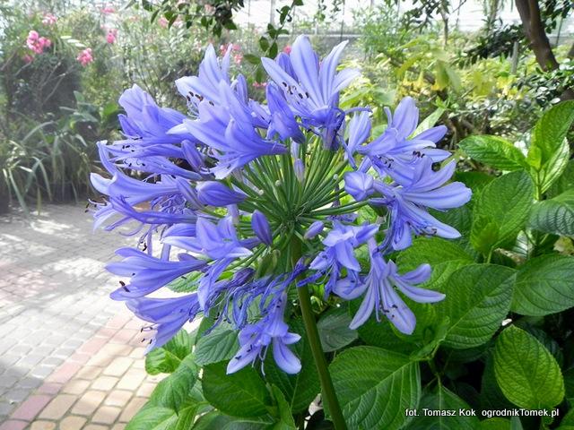 Kwiaty Letnie Ogrodnik Tomek
