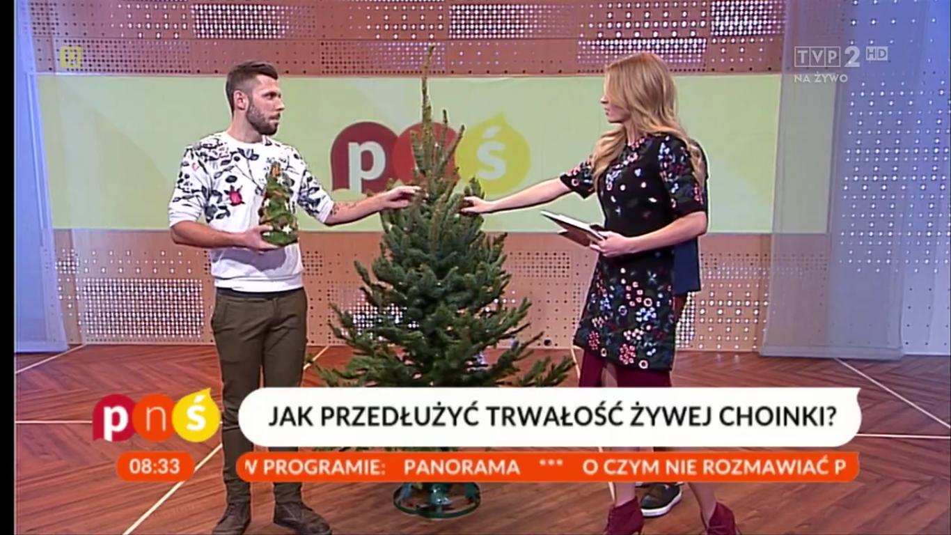 Ogrodnik Tomek o tym jak przedłużyć trwałość choinki w Pytaniu na śniadanie TVP2 [video]