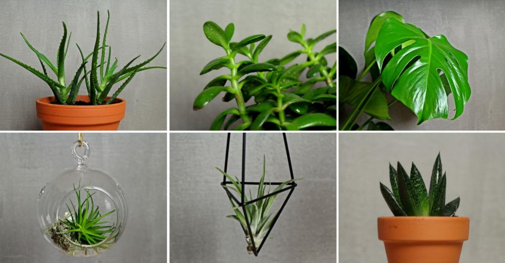 Mało wymagające rośliny doniczkowe – kwiaty domowe dla zapracowanych