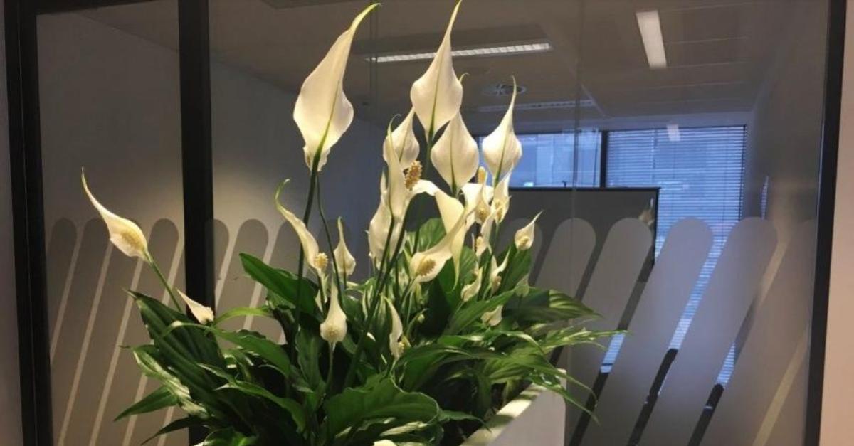 Jak Pielegnowac Kwiaty Domowe Zima Ogrodnik Tomek