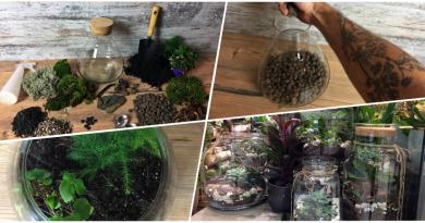 Jak zrobić las w słoiku? – miniaturowy ogród dla każdego