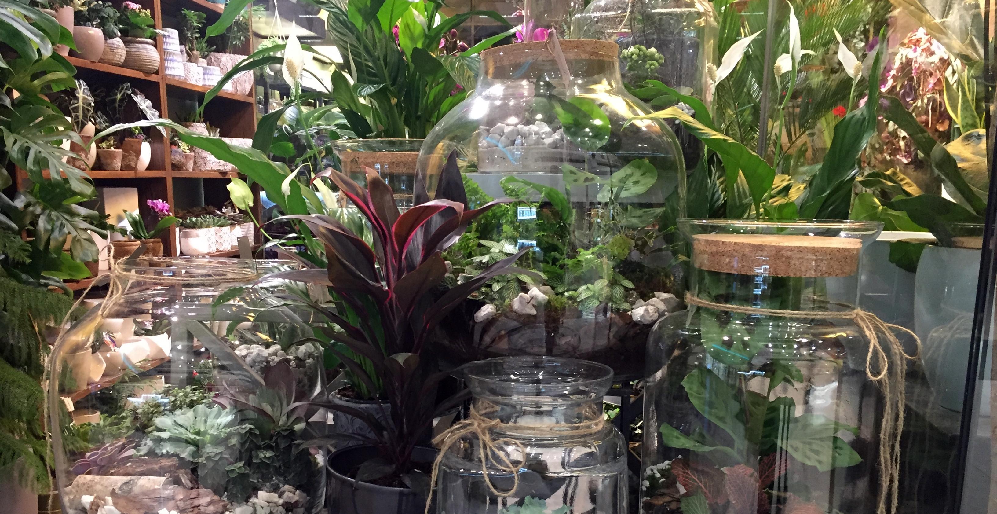 Jak dbać o las w słoiku? Pielęgnacja ogrodu w szkle.
