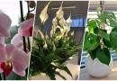 10 najlepszych kwiatów do łazienki